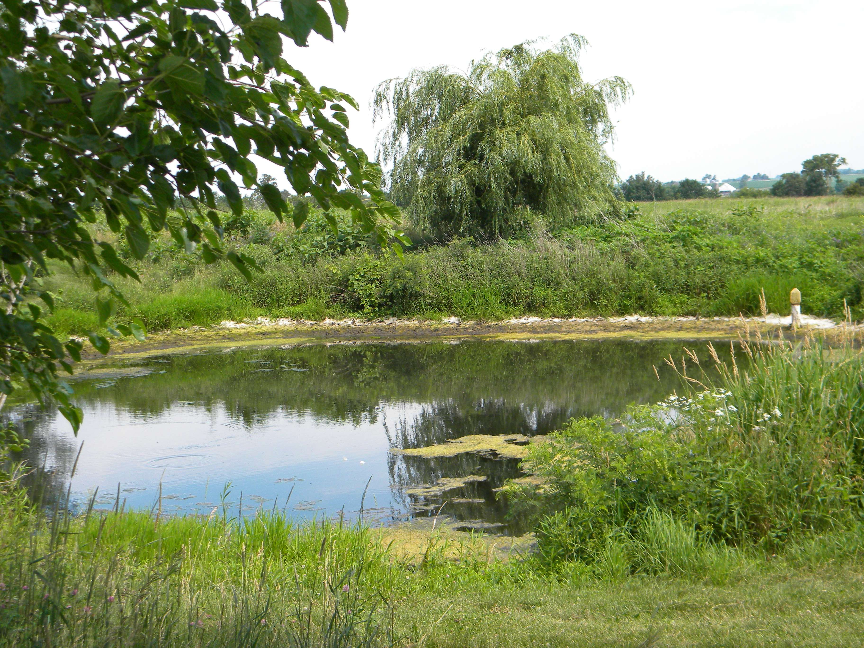 Pond for Natural pond plants