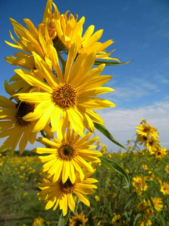 A September Walk Through Our Tallgrass Prairie The
