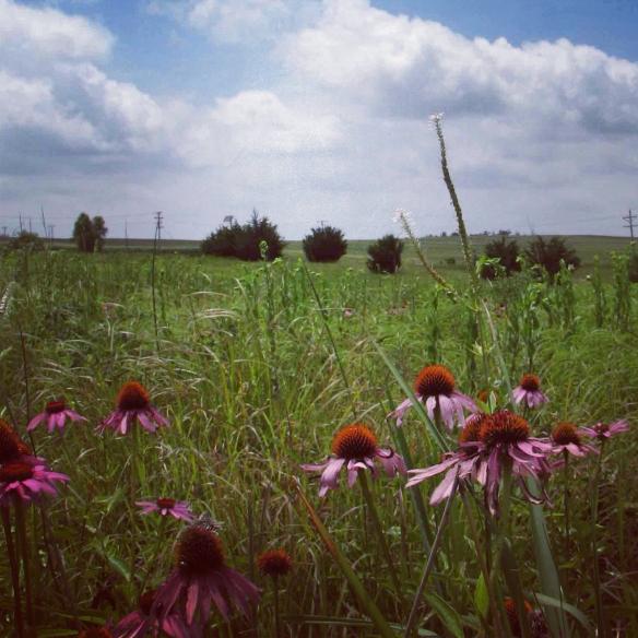 Frontier tallgrass prairie