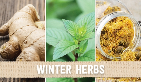 winter herbs