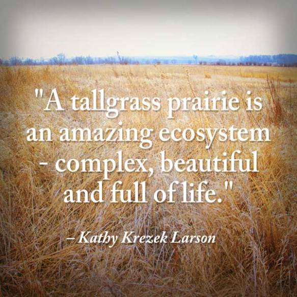 Kathy-quote-tallgrass-600x600