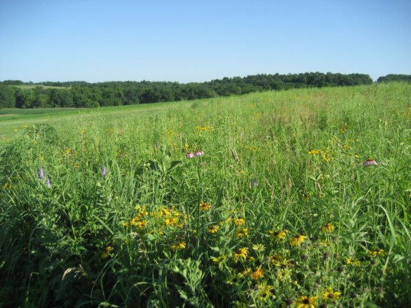 Our dream farm has a lovely view of the Iowa countryside and gives us new opportunities to explore the value of organic growing.